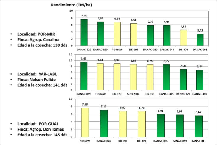 Figura 1. Resultados de cosecha de cultivares de maíz blanco en localidades de Portuguesa y Yaracuy. Ensayos LISC, ciclo lluvias 2015.