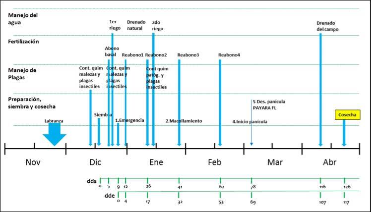 Figura 2. Secuencia de labores de manejo agronómico realizadas en el Ensayo LISC de arroz, ciclo norte-verano 2015-2016, Píritu, estado Portuguesa.